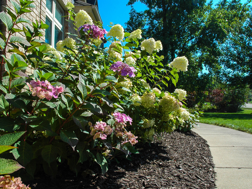 Landscaping Services, Hardscaping Services & Landscape Supplies in Lansing, MI